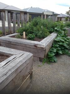 Raised garden beds with timber