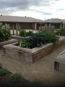 Timber raised garden beds